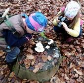 Zkoumání hub, mechů a lišejníků